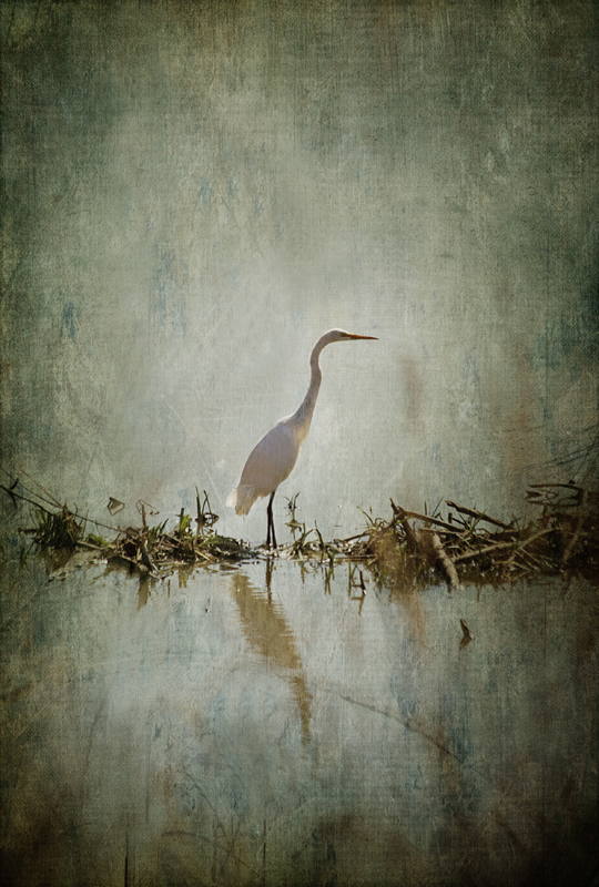 Affolter_White Egret